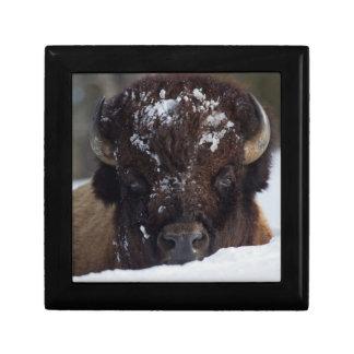 Bison Bull, winter 2 Gift Box
