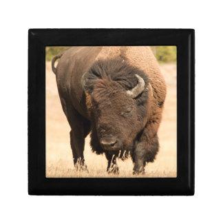 Bison Gift Box