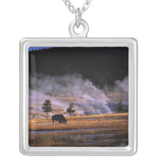 Bison grazing in the Upper Geyser Basin near Silver Plated Necklace