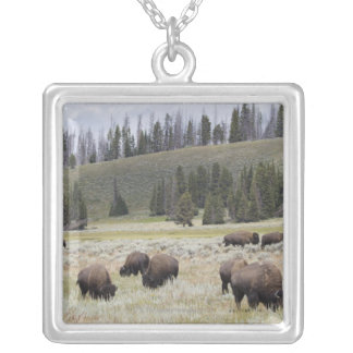 Bison in the Hayden Valley of Yellowstone Silver Plated Necklace