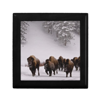 Bison in Winter Gift Box