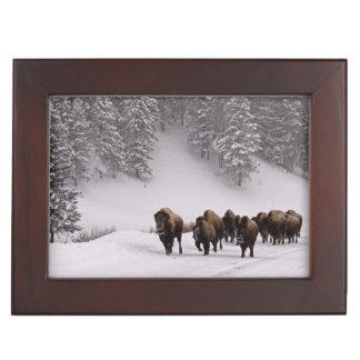 Bison in Winter Keepsake Box