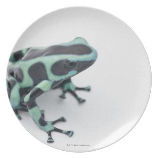 black and green poison dart frog (dendrobates plate