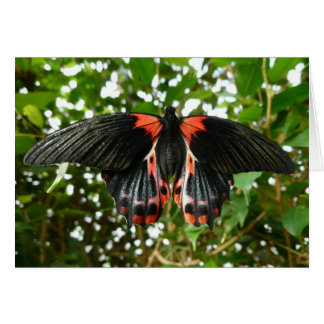 Black and Red Butterfly Note Card