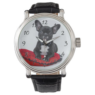 Black and White Bulldog Terrier on Red Pillow Watch