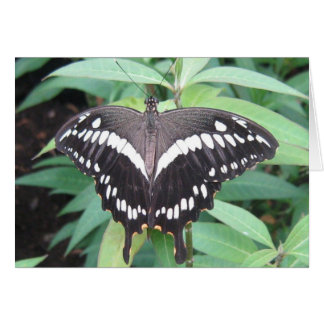 Black and white butterfly note card