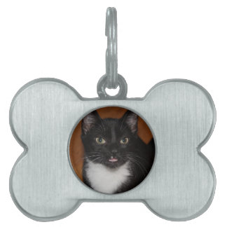 BLACK AND WHITE CAT PET TAG