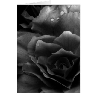 Black and White Close Up of a Double Begonia Card