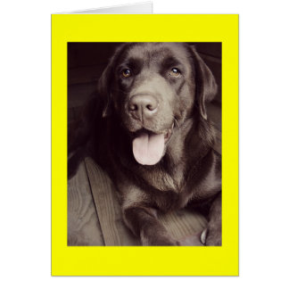 Black And White Labrador Retriever Dog Note Card