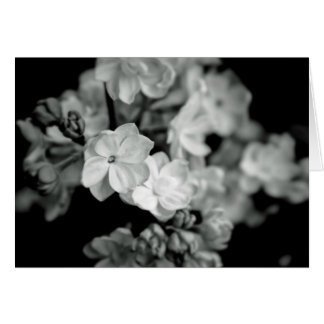 Black and White Lilacs Greeting Card