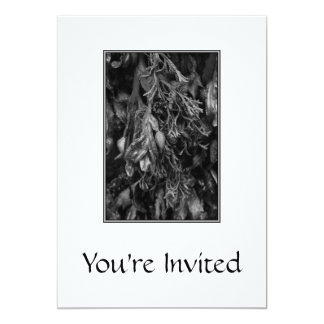 Black and White Picture of Seaweed. Card