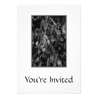 Black and White Picture of Seaweed. Custom Announcement