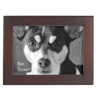Black and White Rat Terrier Keepsake Box
