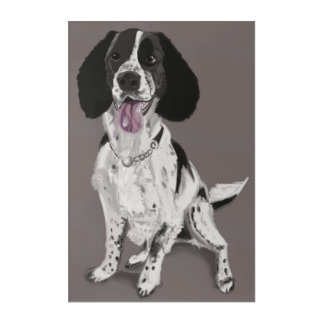 Black and White Springer Spaniel Acrylic Print