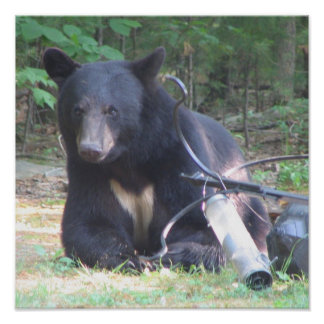 Black Bear with White Heart Tattoo Poster