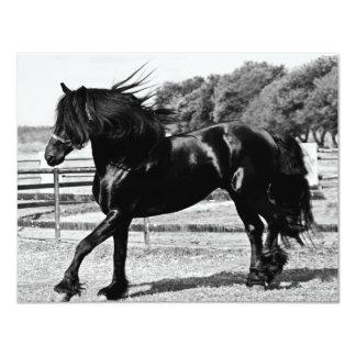 Black Beauty Horse Card