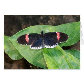 Black Butterfly Thank you Note Card