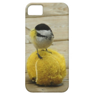 Black-cap chickadee having a ball Iphone 5 cover. iPhone 5 Cover