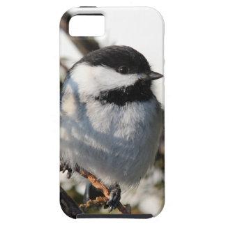 Black Capped Chickadee iPhone 5 Case