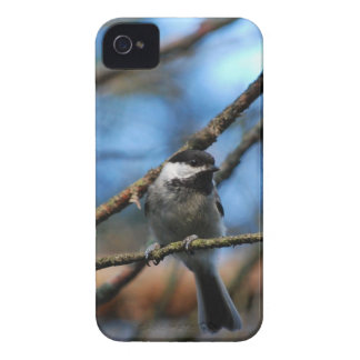 Black-Capped Chickadee Wraps Toes Around Narrow Tw iPhone 4 Cover