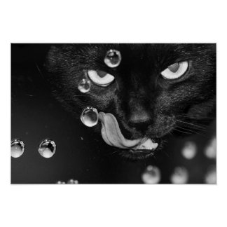 Black Cat with Water Bubbles Value Poster Paper