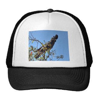 BLACK COKATOO RURAL QUEENSLAND AUSTRALIA CAP