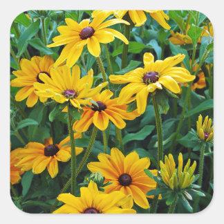 Black eyed susan flower garden square sticker