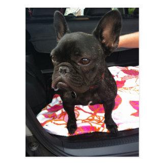 Black French Bulldog Postcard
