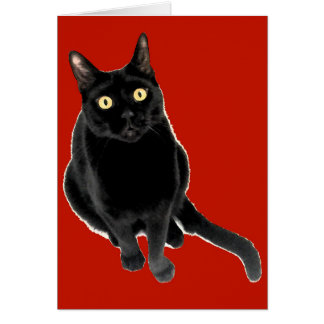 Black Kitty Cat Photography Greeting Card