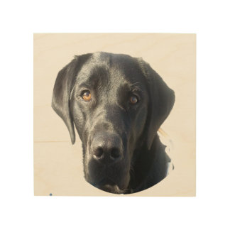 Black Labrador Dog Portrait Wood Print