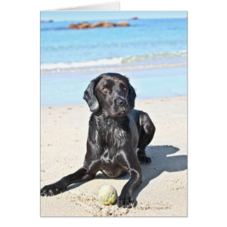 Black Labrador Dog sitting on the Beach Card