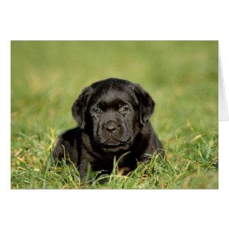 Black labrador retriever puppy card