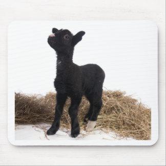 black lamb mouse pad