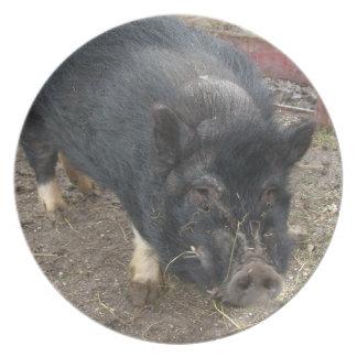 Black Mini Pig Plate