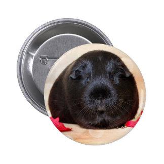 Black Short Haired Romance Guinea Pig 6 Cm Round Badge