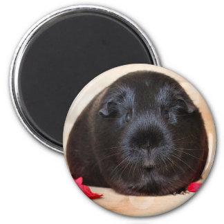 Black Short Haired Romance Guinea Pig 6 Cm Round Magnet
