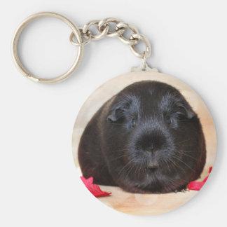 Black Short Haired Romance Guinea Pig Basic Round Button Key Ring