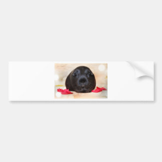 Black Short Haired Romance Guinea Pig Bumper Sticker