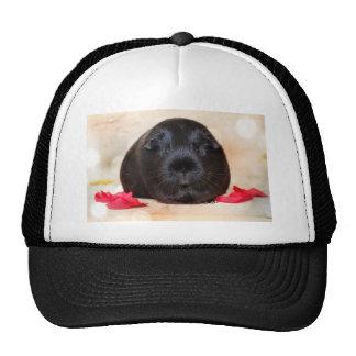 Black Short Haired Romance Guinea Pig Cap