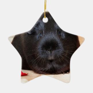 Black Short Haired Romance Guinea Pig Ceramic Star Decoration