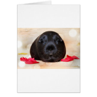 Black Short Haired Romance Guinea Pig Greeting Card