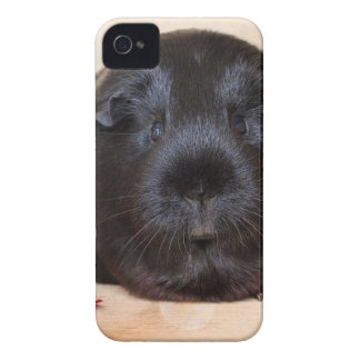 Black Short Haired Romance Guinea Pig iPhone 4 Cover