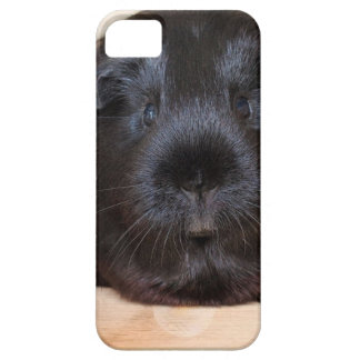 Black Short Haired Romance Guinea Pig iPhone 5 Cover