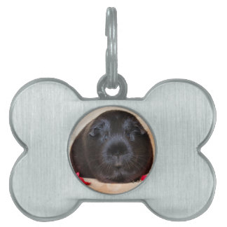 Black Short Haired Romance Guinea Pig Pet Name Tag