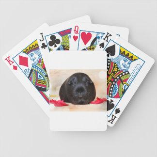 Black Short Haired Romance Guinea Pig Poker Deck