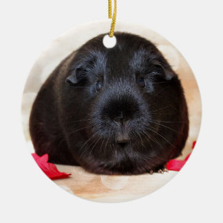 Black Short Haired Romance Guinea Pig Round Ceramic Decoration