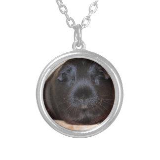 Black Short Haired Romance Guinea Pig Round Pendant Necklace