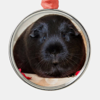 Black Short Haired Romance Guinea Pig Silver-Colored Round Decoration