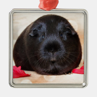 Black Short Haired Romance Guinea Pig Silver-Colored Square Decoration