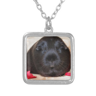 Black Short Haired Romance Guinea Pig Silver Plated Necklace